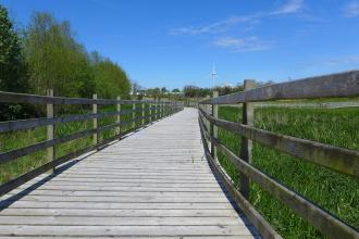 Boardwalk at Balloo Wetland