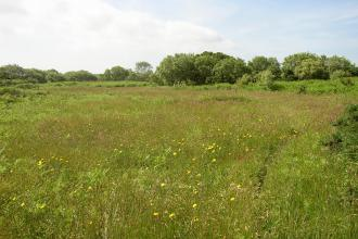 Meadow at Inishargy Bog