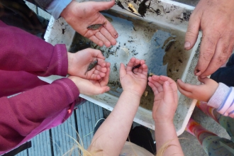Kids holding sticklebacks