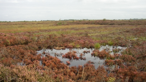Ballynahone Bog - Autumn colours