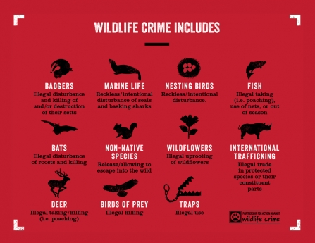 Wildlife Crime List