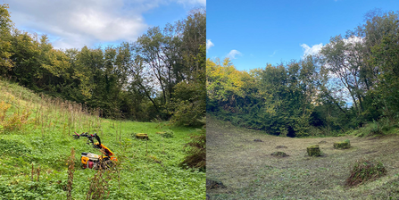 Woodland glade clearance at Straidkilly before and after
