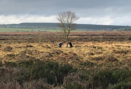 Removing conifers from Monegal Bog
