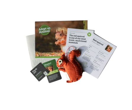 Red squirrel sample pack