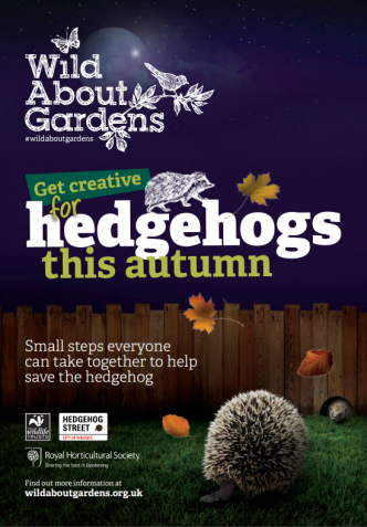 Hedgehog booklet cover